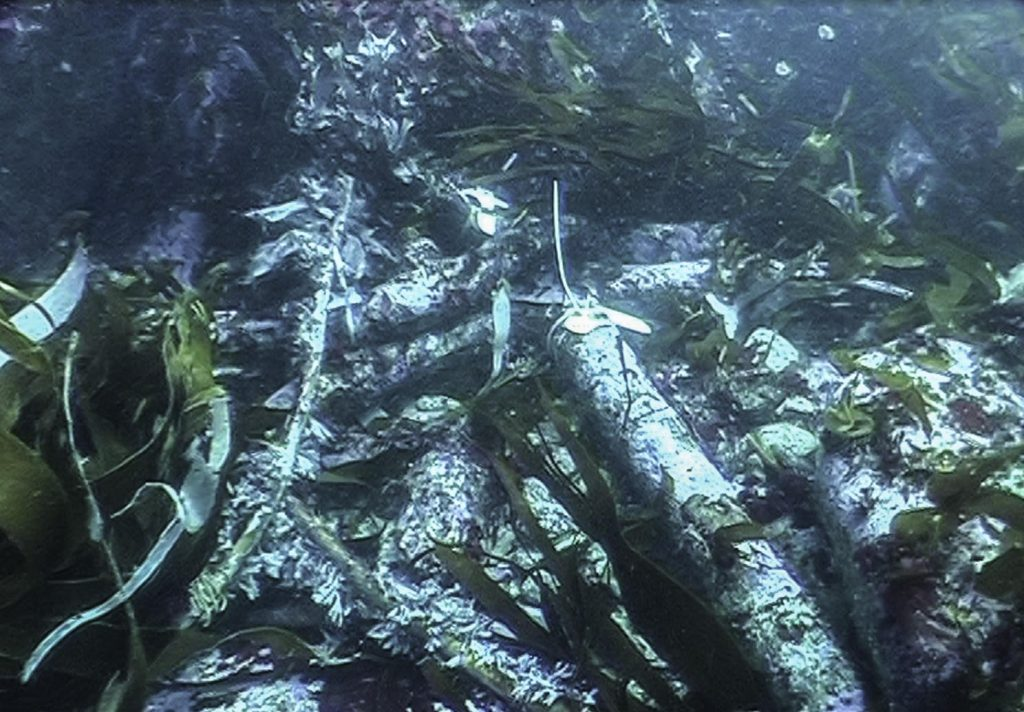 Pile of iron anchors sitting on a rocky seabed, surrounded by kelp