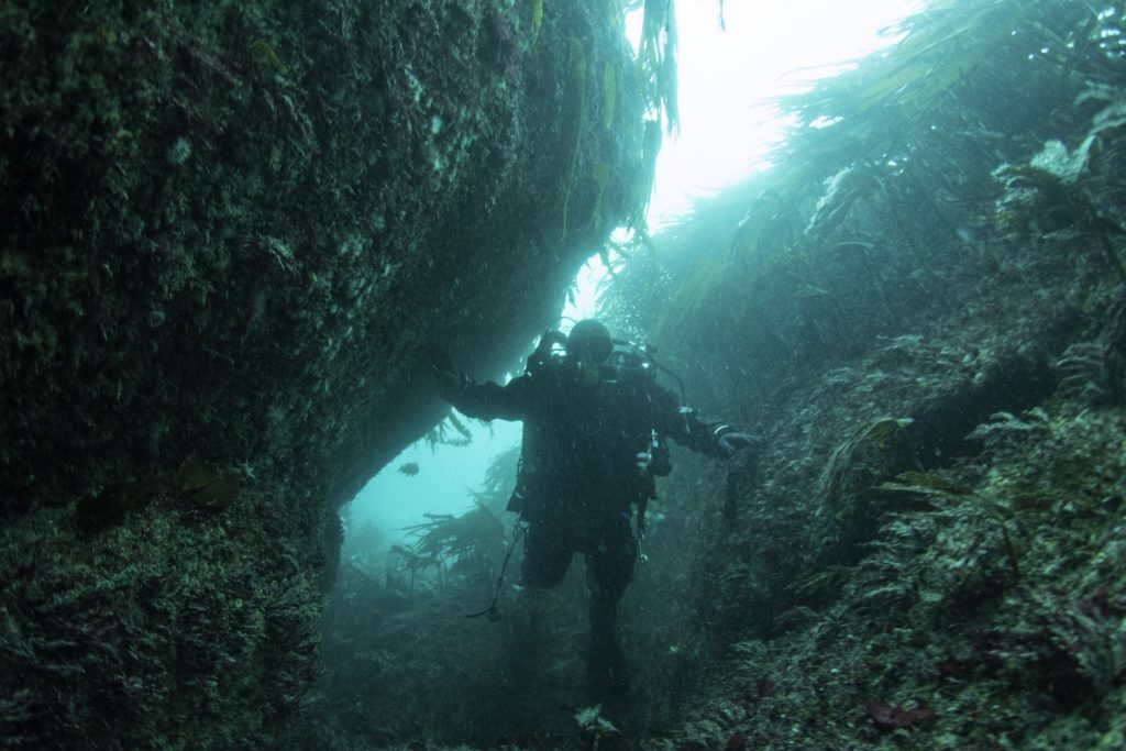 Diver on the seabed standing in a deep, narrow gulley. The gulley sides are covered in seaweed