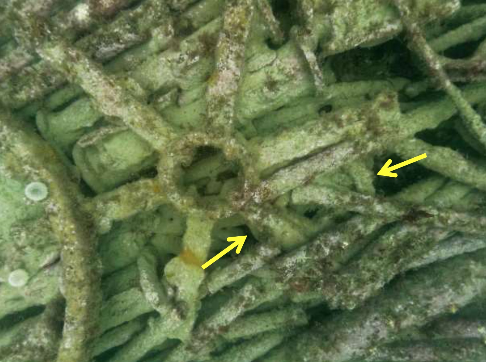 Underwater photo of components on the Wheel Wreck. Yellow arrows point out the almost hidden smaller wheel. A few teeth can just be observed, demonstrating that this wheel was possibly part of a gear train.